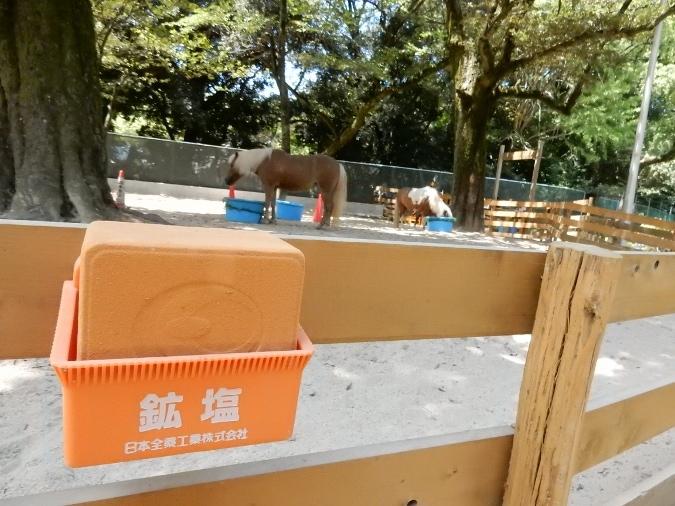 五月山動物園 (7)